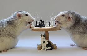 images_chess
