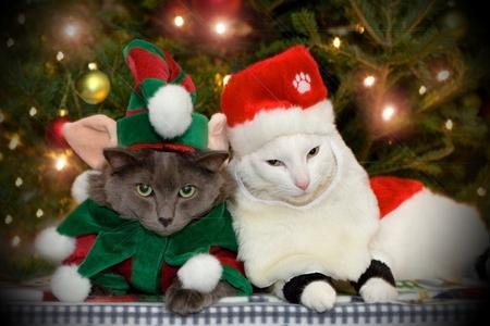 cute_cats_christmas