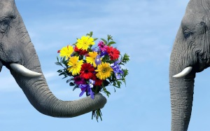 funny-animal-wallpaper-with-a-elephant-giving-flowers-to-another-elephant