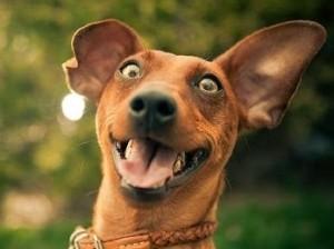 image_dog_smiling