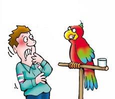 image_funny_parrot