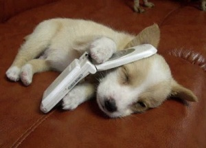 images-puppy-cellphone