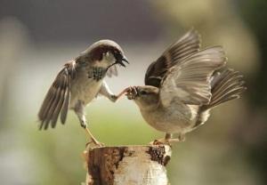 images_bird_shutup