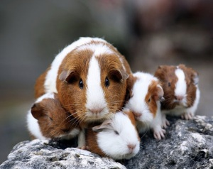 images_family_hamsters