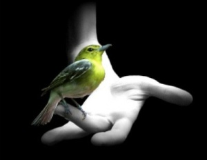 images_bird_letgo