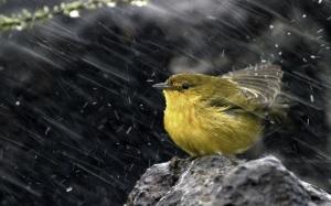 images_birds_rain