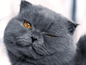 images_cute_cat_wink