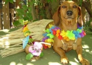 images_cute_dog_in_hawaii