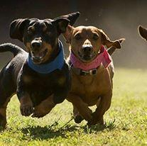 images_cute_dogs_running