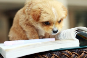 images_cute_puppy_reading