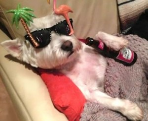 images_dog_cute_beer