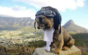 images_dog_travelling