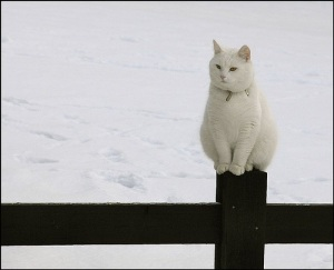 images_funny_cat_alone