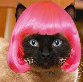 images_funny_cat_wig