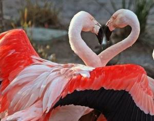 images_love_flamingo