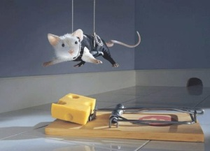 images_mouse_plan