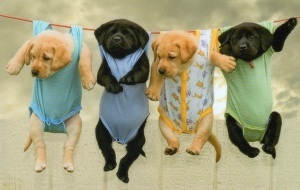 images_puppies_hanging