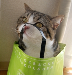 images_cat_in_a_bag