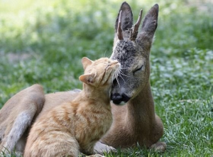 images_cute_animals_loving_one_another