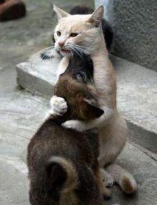 images_cute_dog_cat