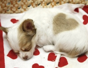 images_cute_dog_love
