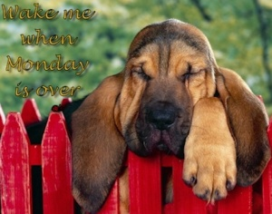 images_cute_dog_monday_blues