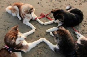 images_cute_dogs_praying