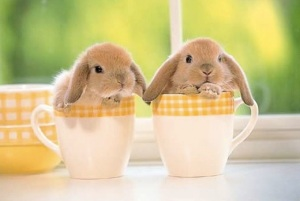 images_cute_easter_bunnies