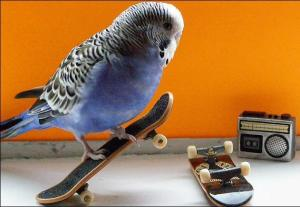 images_cute_bird_skateboard