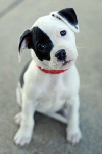 images_cute_puppy_black_eye