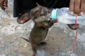 images_feeding_baby_animal