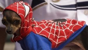 images_funny_dog_spiderman