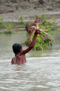 images_boy_saves_fawn_from_drowning