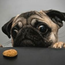 images_cute_dog_biscuit