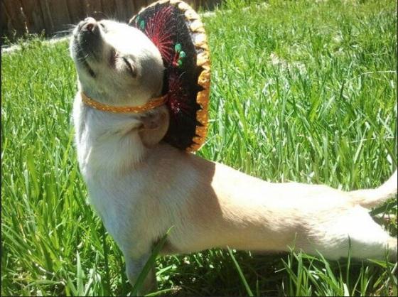 images_cute_dog_enjoying_the_sunshine
