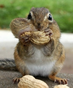 images_funny_greedy_squirrel