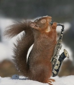 images_funny_squirrel_playing_saxophone