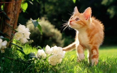 images_cute_cat_beautiful_nature