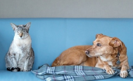 images_cute_cat_dog_keeping_quiet