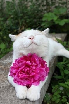 images_cute_cat_pretty_flower