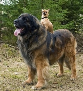 images_cute_dog_taking_a_ride