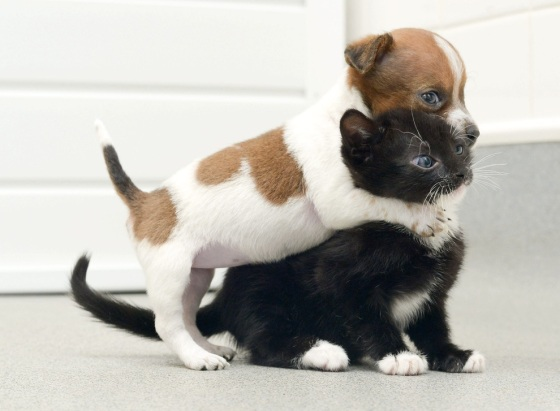 images_cute_puppy_hugging_kitten