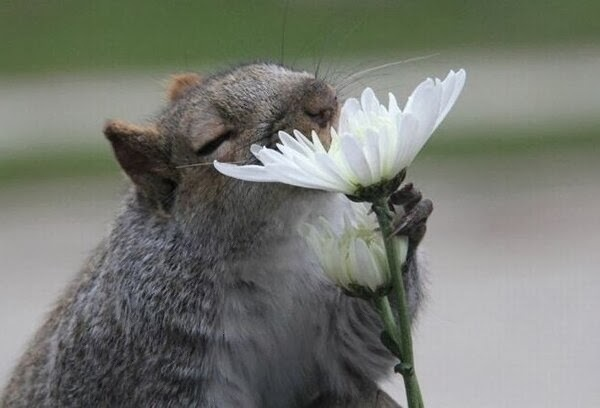 images_funny_animal_feeling_nature