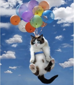 images_funny_cat_balloons