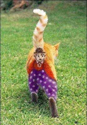 images_funny_cat_clown