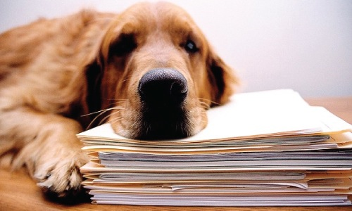 images_funny_dog_paperwork