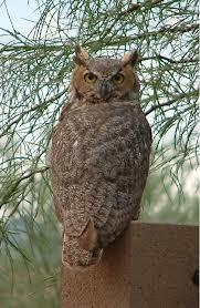 images_owl_turning_head