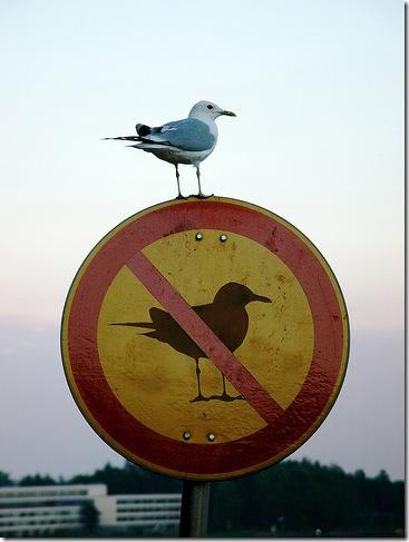 images_bird_breaking_law