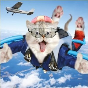 images_cute_cat_skydiving