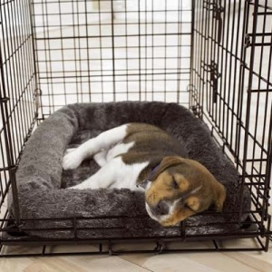 images_cute_dog_in_the_cage